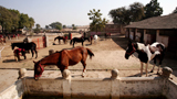 Welfare of Animals
